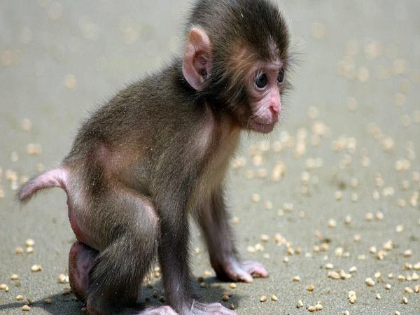 Vì sao lại mơ thấy con khỉ?