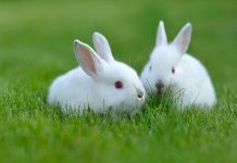 Vì sao lại mơ thấy con thỏ