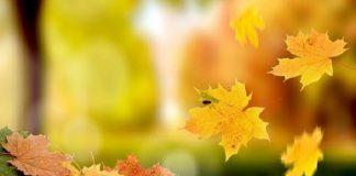 Vì sao lại mơ thấy lá rụng