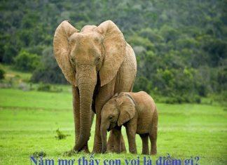 Nằm mơ thấy con voi dự đoán kqxsmb