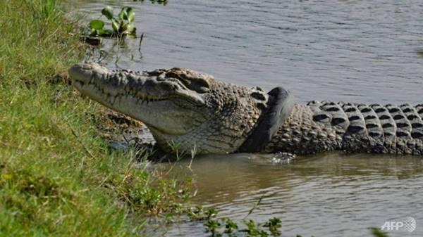 Giải mã giấc mơ thấy cá sấu là điềm gì? đánh số mấy
