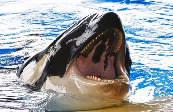 Nằm mơ thấy cá mập thường mang đến điềm báo gì