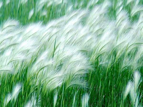 Mơ thấy gió là điềm báo điều gì?