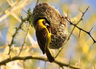 Ý nghĩa giấc mơ thấy chim sẻ là tốt hay xấu?