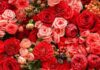Mơ thấy hoa hồng đánh con gì xác suất trúng thưởng cao nhất?