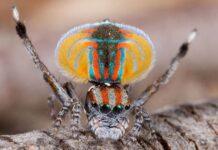 Mơ thấy nhện dự báo điềm gì trong tương lai? Đánh con gì?