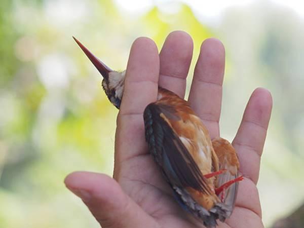 Giải mã giấc mơ thấy bắt chim là điềm báo gì? đánh lô đề số mấy