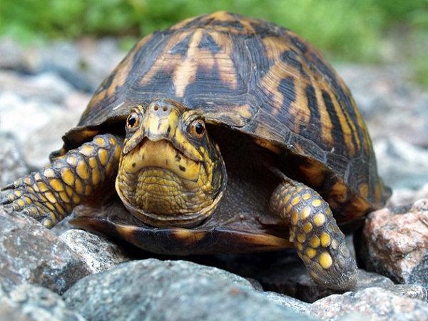 Nằm mơ thấy rùa đánh xổ số con gì dễ trúng