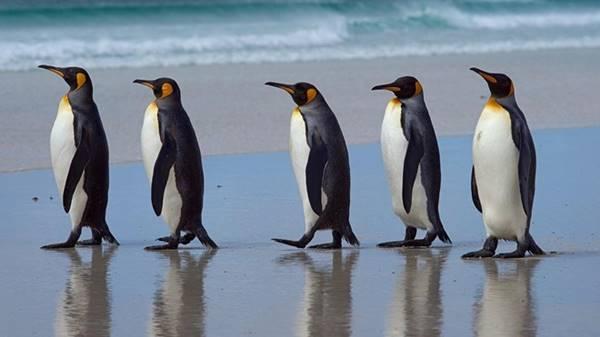 Giải mã giấc mơ thấy con chim cánh cụt là điềm báo gì