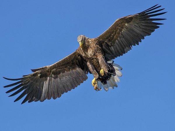Mơ thấy chim đại bàng điềm báo lành hay dữ?