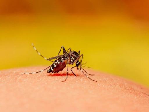 Nằm mơ thấy con muỗi đánh con gì may mắn