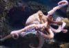 Mơ thấy bạch tuộc đánh ngay cặp số nào để giải xui?