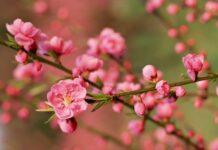 Nằm mơ thấy hoa nở đánh con gì có ý nghĩa gì