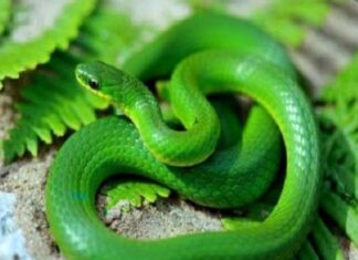 Nằm mơ thấy rắn xanh đánh con gì báo điềm gì
